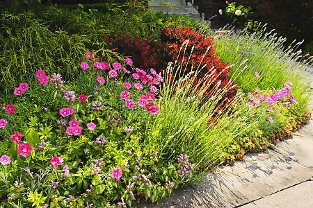 lush garden at home