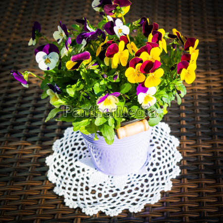 horn violets on crocheted