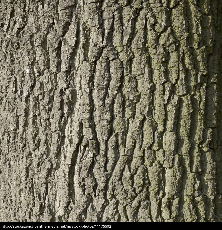 natur hintergrund baum laubbaum rinde eiche rau lizenzfreies foto 11175592 bildagentur. Black Bedroom Furniture Sets. Home Design Ideas