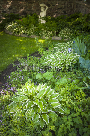 shady garden with perennials