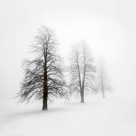 winterbaeume im nebel
