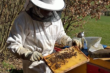imker kontrolliert bienenwabe