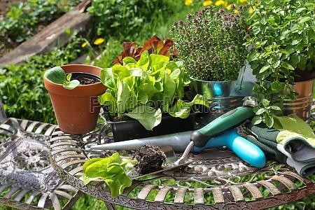 gardening seedlings gardening