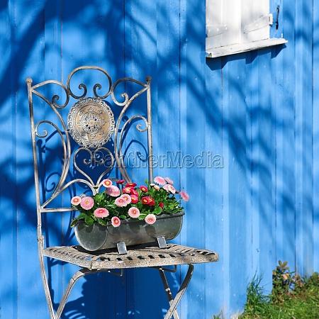 garden chair with daisy