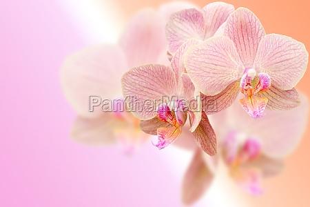 blume blumen pflanze exotisch tropische tropisch