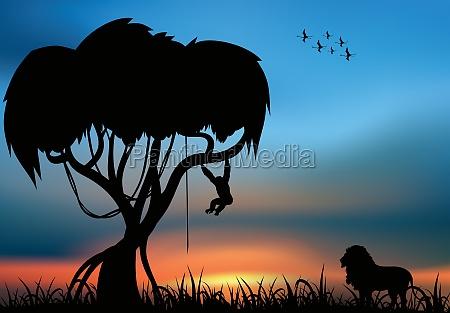 afrika loewe und schimpanse