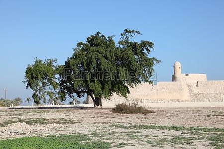 qalat al bahrain site museum fort