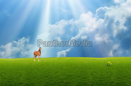 pferd im grasland