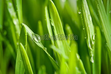 regentropfen fallen nass tau waessern feuchten