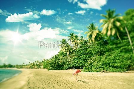tropischer strand mit ein flamingo der