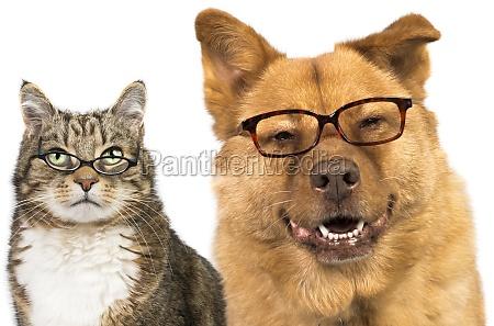 hund und katze traegt eine brille