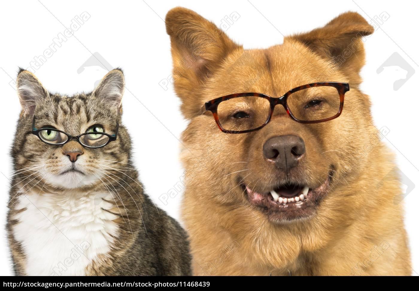 Tolle Katze Rahmen Brillen Galerie - Benutzerdefinierte Bilderrahmen ...