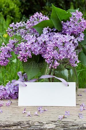 syringa lilac blossoms violet may vase