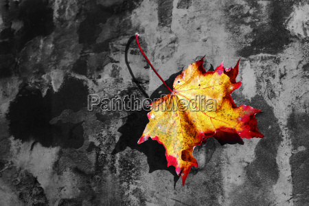 leaf tree autumn foliage leaves foliage