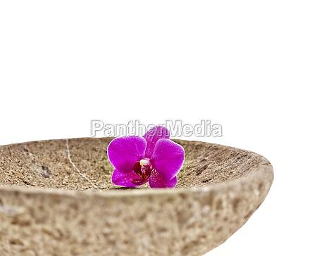 bluete orchidee schale