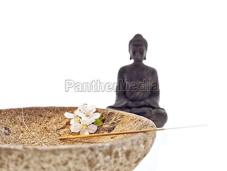 buddha schale bluete orchidee