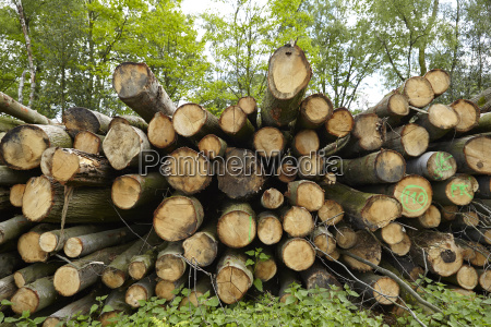 broadleaf forest pile of tree