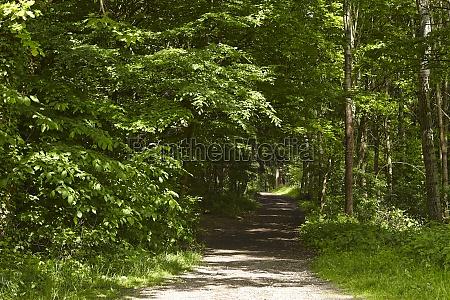 broadleaf forest forest path