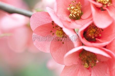 pink flowers on vintage background