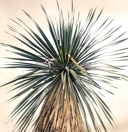 kreative natur stachelige palme