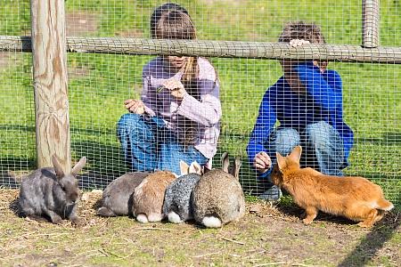 kinder kaninchen fuettern