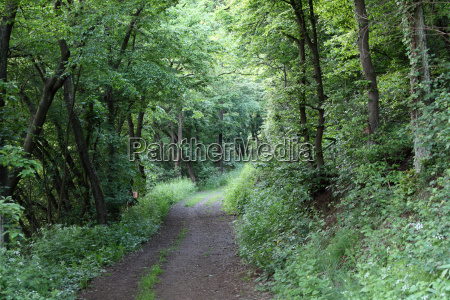 road in the dark green forest