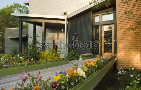 flower bed with pansies outside modern