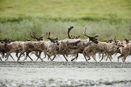 tier saeugetier nationalpark usa horizontal outdoor