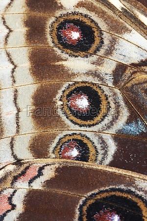detail der schmetterlingsfluegel