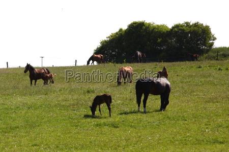 green horse horses foal waist belt