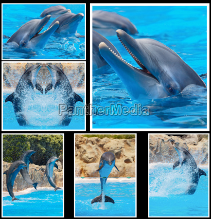 collage von fotos von delphinen in