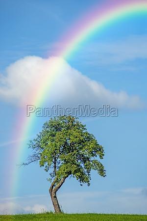 baum mit regenbogen