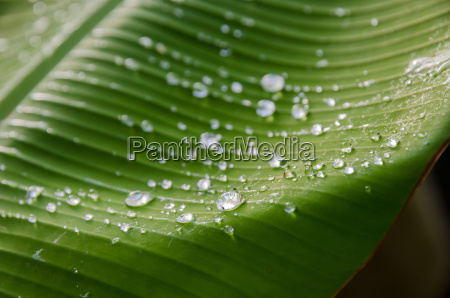 water droplets on a leaf in
