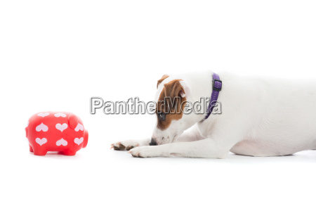piggy bank and dog