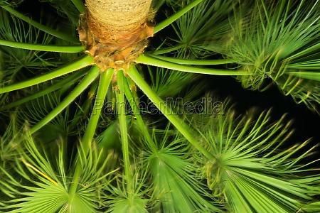 palmenblaetter in der nacht