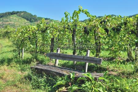 weinlaube im weinanbaugebiet am kaiserstuhl schwarzwald