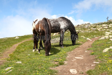 holiday vacation holidays vacations horse dolomites