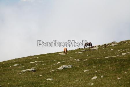 Südtirol, Pferd, Dolomiten, Pferde, Urlaub, Natur - 11869783