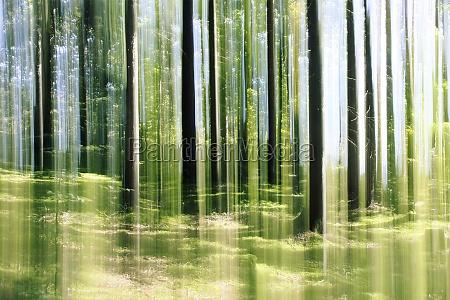 forest vertical motion blur