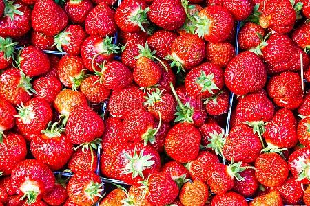 comida dulce color primer plano jardin