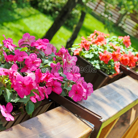 balcony flower boxes filled with flowers
