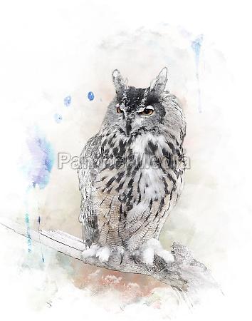 aquarellbild owl