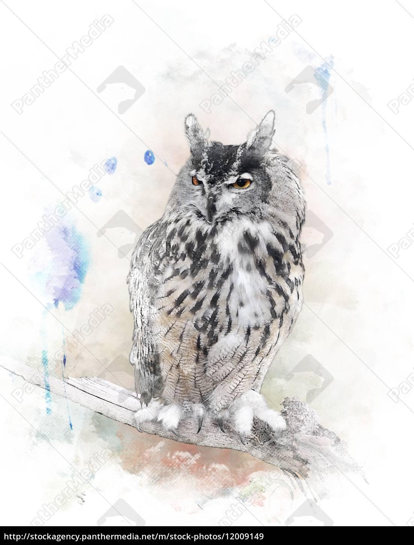 aquarellbild, owl - 12009149