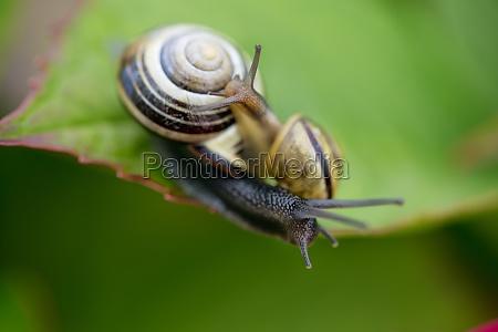 garden snail gardens page sheet meadow