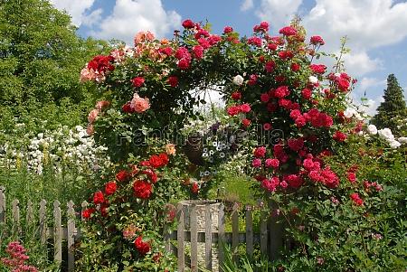 rosenbogen
