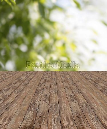 wooden floor and green plants