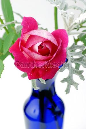 pink rose with blue vase