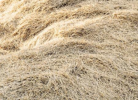background dry hay