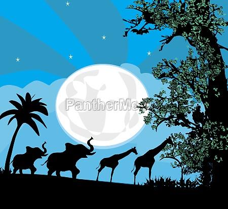 safari in afrika silhouette von wilden