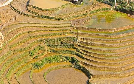 reisterrassenfelder in sapa vietnam